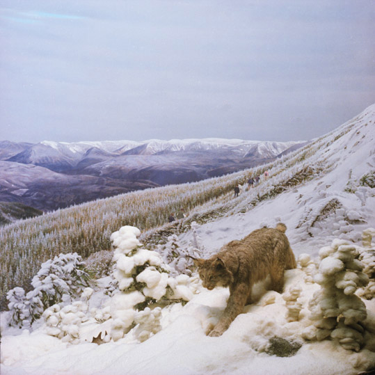 ANNE ZAHALKA     Lost Lynx  2006/2007 Type C Photograph edition of 10   80 x 80 cm