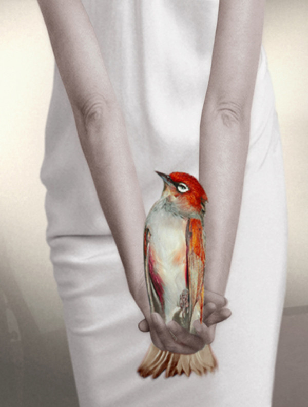 PAT BRASSINGTON    Bird in Hand  2007 65 x 86 cm Pigment Print edition of 8