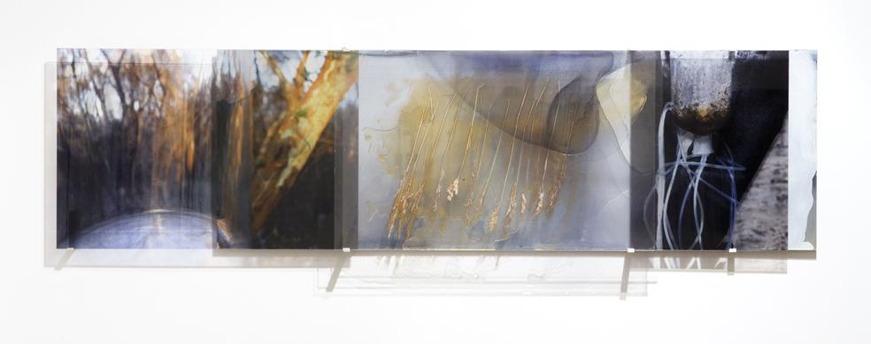 JANET LAURENCE    Botanical Resuscitation l    2006   Duraclear, shinkolite acrylic, aluminium, oil, pigment   190 x 50 cm