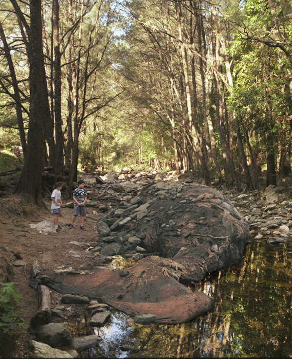 ANNE ZAHALKA     Dead Whale, Grove Creek  2003-06 Type C photograph edition of 12 145 x 115 cm