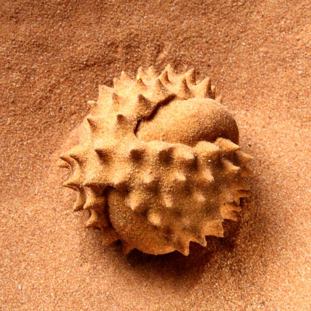 MARIA FERNANDA CARDOSO    Pollen is Male 1    2012 - 2014   6 x 5 cm   Nylon, glue, desert sand
