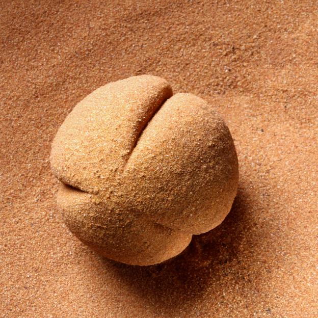 MARIA FERNANDA CARDOSO    Pollen is Male 4    2012 - 2014   5.9 x 5.4 cm   Nylon, glue, desert sand