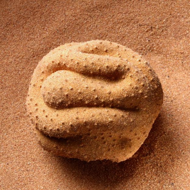 MARIA FERNANDA CARDOSO    Pollen is Male 5    2012 - 2014   6.6 x 5.9 cm   Nylon, glue, desert sand