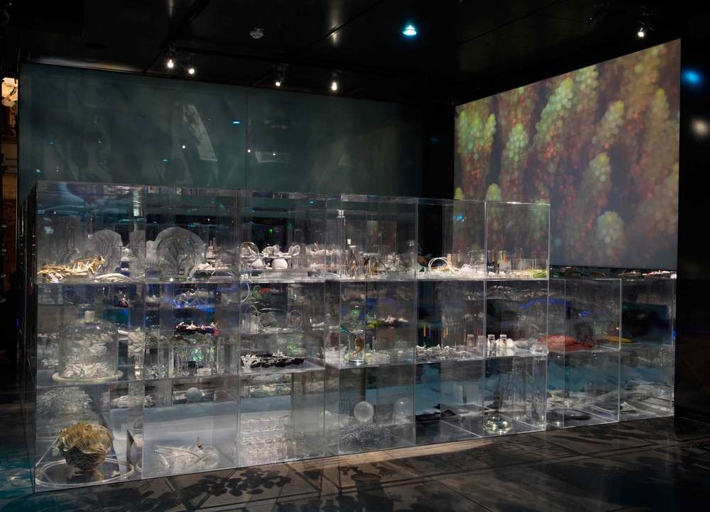 Janet Laurence,  Deep Breathing: Resuscitation for the Reef,  installation view.