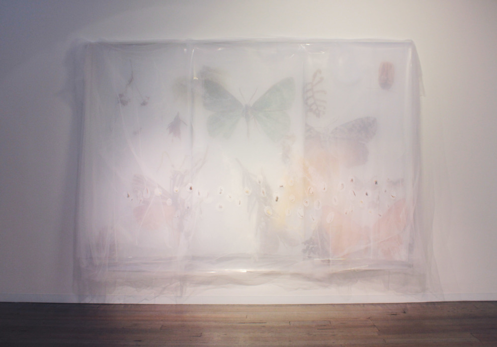 JANET LAURENCE    Silence in the Umwelt (from the Skullbone Experiment, Tasmanian Land Conservancy Project)  2014 Tulle, plant specimens, inkjet print on metallic paper, inkjet print on mylar  376 x 245 cm