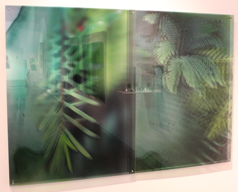 JANET LAURENCE   Plants Eye View (the Tarkine, Tasmania)  2012 duraclear, acrylic, dibond, mirror 120 x 173cm