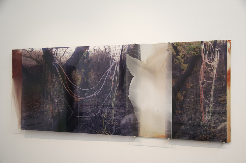 JANET LAURENCE    Carbon Vein  2008 Duraclear, oil pigment on acrylic  235 x 100 cm