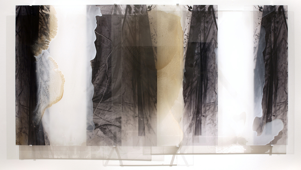 JANET LAURENCE   Ghosting Light (From the Selva Veil)  2006 Duraclear on Shinkolite Acrylic