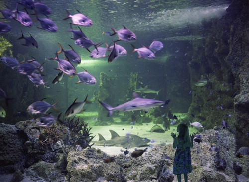 ANNE ZAHALKA     Reef Theatre, Sydney Aquarium  2003-06 Type C photograph edition of 12 115 x 145 cm