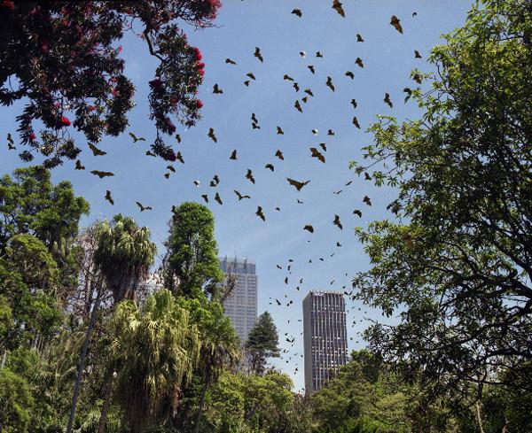 ANNE ZAHALKA     Botanical Gardens, Sydney  2003-06 Type C photograph edition of 12   11  5 x 14  5 cm