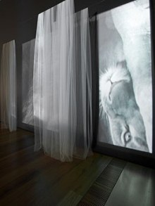 JANET LAURENCE   Vanishing  (installation view) 2009