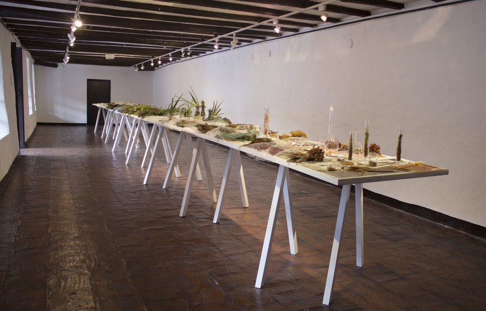 JANET LAURENCE    The Lives of Plants  2016 Mixed media installation Dimensions variable
