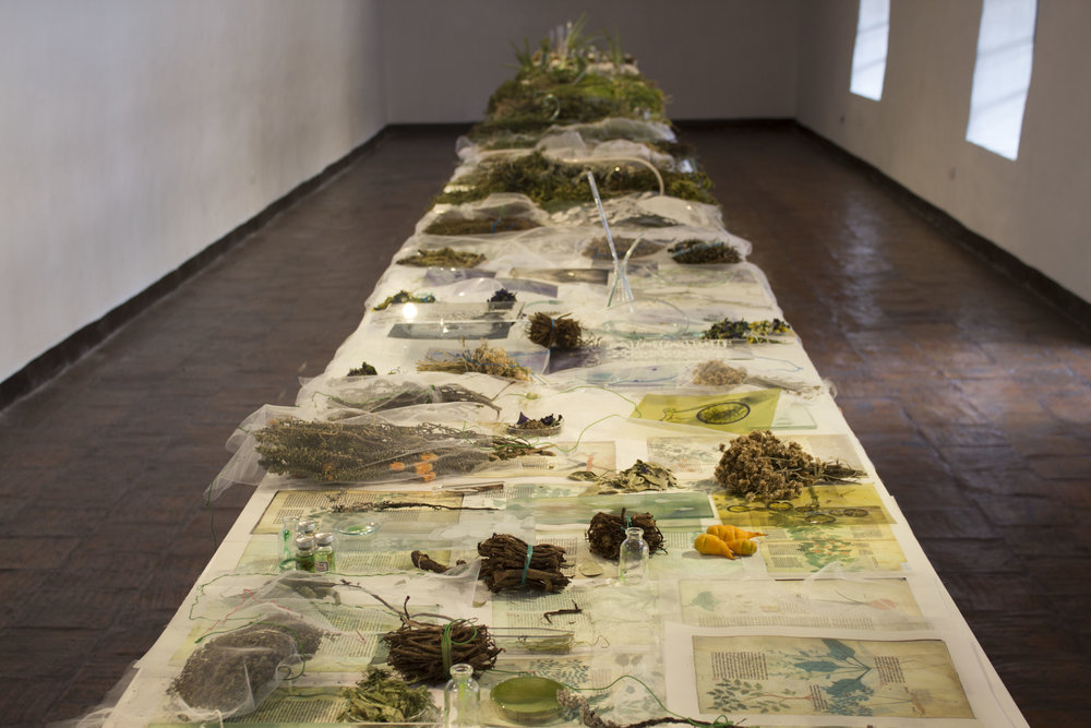 JANET LAURENCE    Lives of Plants  2016 Mixed media installation Dimensions variable
