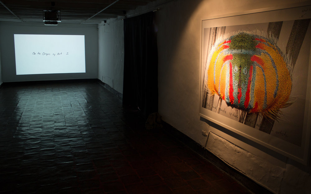MARIA FERNANDA CARDOSO   Installation view   2016 XIII Bienal de Cuenca, Ecuador.