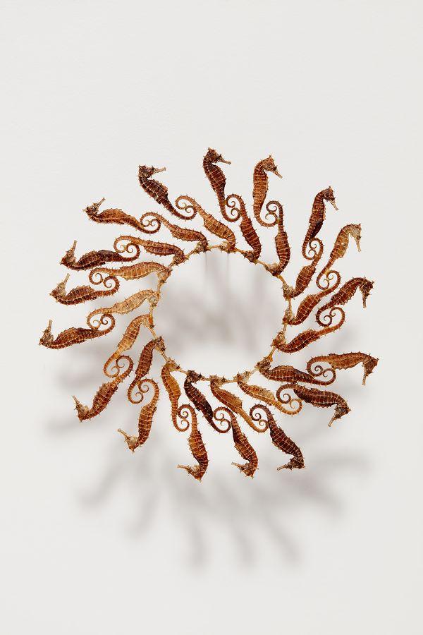 Maria Fernanda Cardoso,Seahorse Circle, 2003