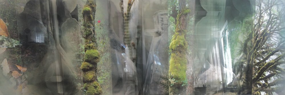 JANET LAURENCE   Chlorophyll Collapse - Collecting  2017 Dye-Sublimation prints on aluminium, Duraclear on Shinkolite Acrylic  100 x 306.5 cm