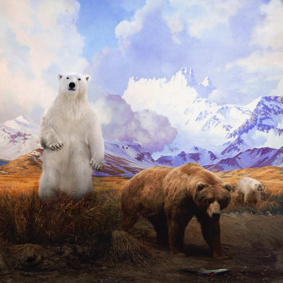 ANNE ZAHALKA   Polar Bear, Grizzly Bear and Grolar Bear  2017 archival pigment inks on rag paper 80 x 80 cm
