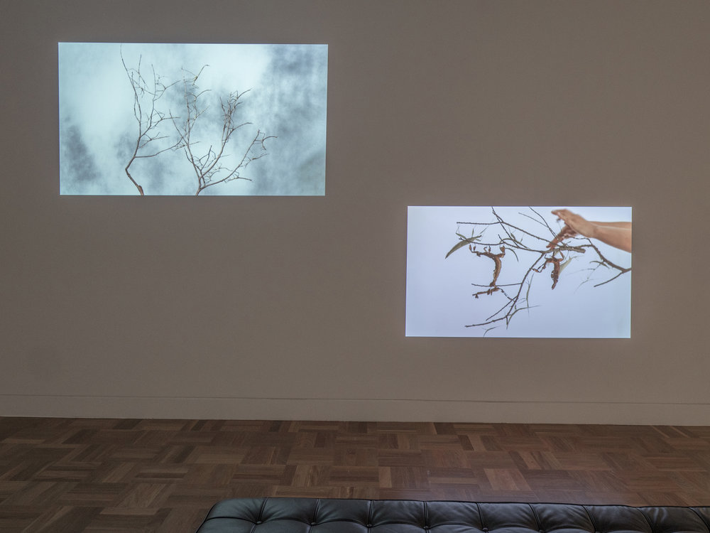 Image: Maria Fernanda Cardoso,  Leaves / Hojas , installation view, 2017, courtesy Shepparton Art Museum as part of  Cover Versions: Mimicry and Resistance.  Image: Serana Hunt.