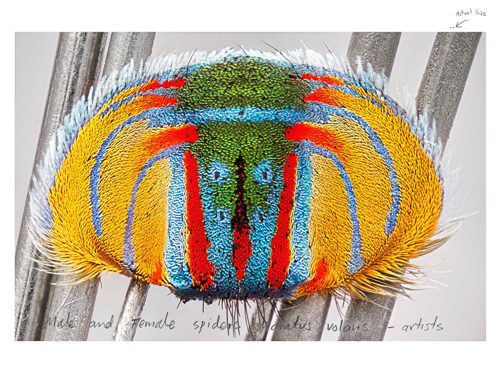 MARIA FERNANDA CARDOSO    Actual Size I   2016 Pigment print on premium photo paper 300gr, 4/5 152.4 x 203.6cm
