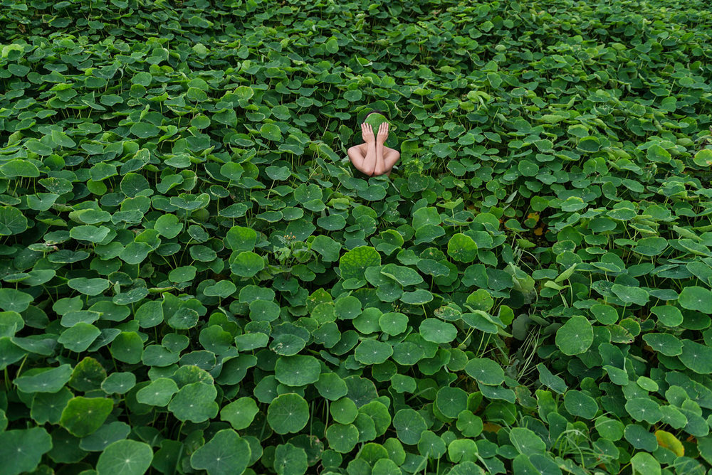 HONEY LONG & PRUE STENT   Nasturtium II  2014 Archival pigment print Edition of 5 + 3 AP 72 x 108 cm & 106 x 157 cm