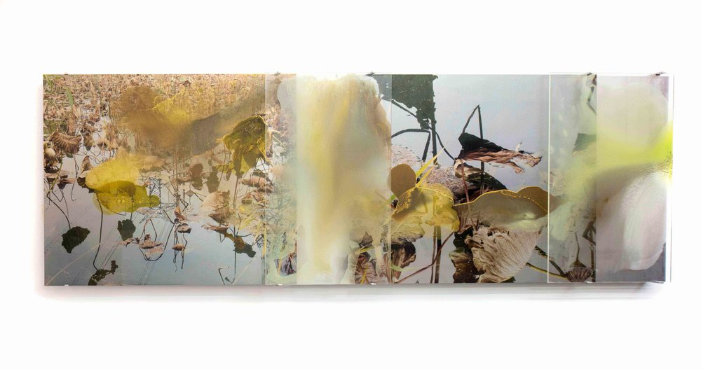 JANET LAURENCE   Lotus Pond (Water Oil Gold)  2018 C type silver halide print on clear polyester & Dye sublimation archival print onto Choromalux aluminium and oil glaze on acrylic 100 x 300 cm