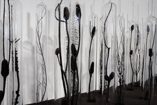 Janet Laurence,  Natural History , 2008, Glass vials, botanical specimens, wood, steel, polished aluminium mirror.