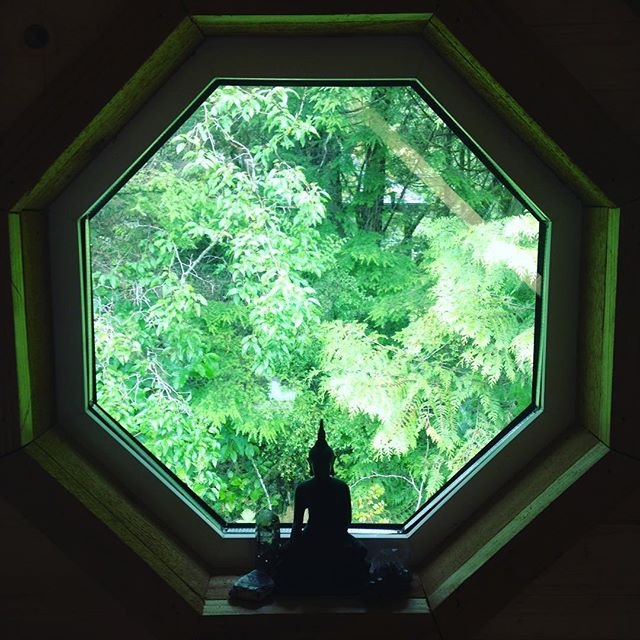 Peace portal. #zenden #meditation #buddha #trees #forest #green #tranquil #nature #healing #spirituality #sacredgeometry