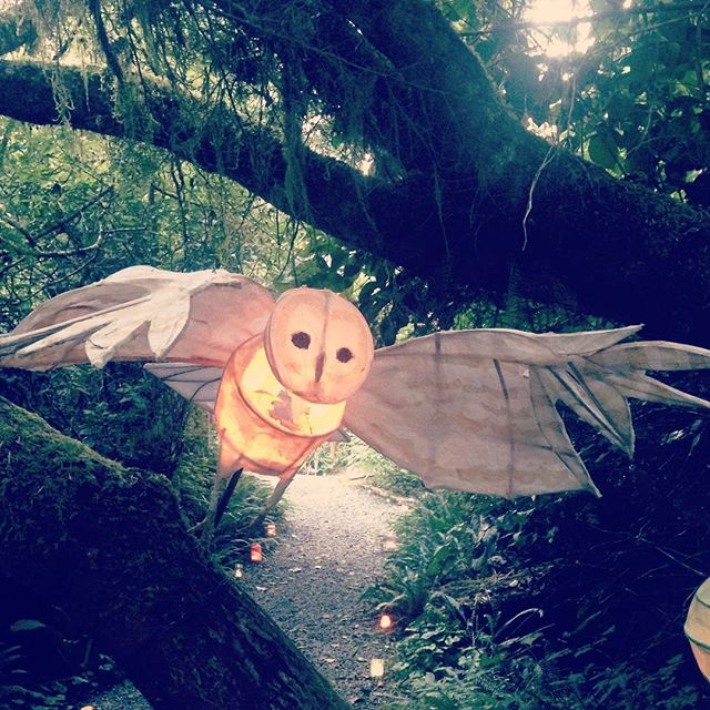 Night eagle. #whiteowl #owlmedicine #spiritguide #messagefromtheuniverse #lightupthedark #followthelight #lightvision #paperlantern #lanternfestival