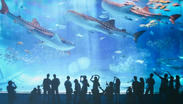 BARCELONA AQUARIUM   In the Port of Barcelona, next to Imax & MareMagnum shopping mall