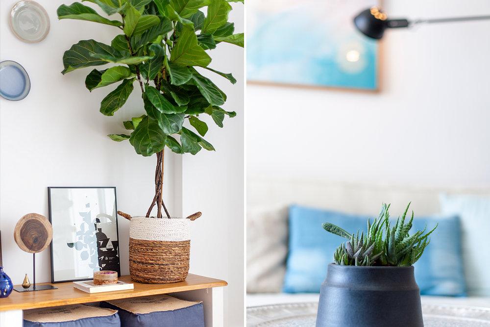DECORATION - Original decoration and tropical vegetation.