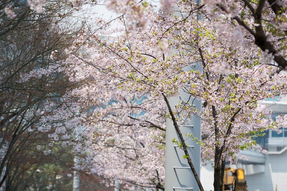 韓國街景 - 點我看作品