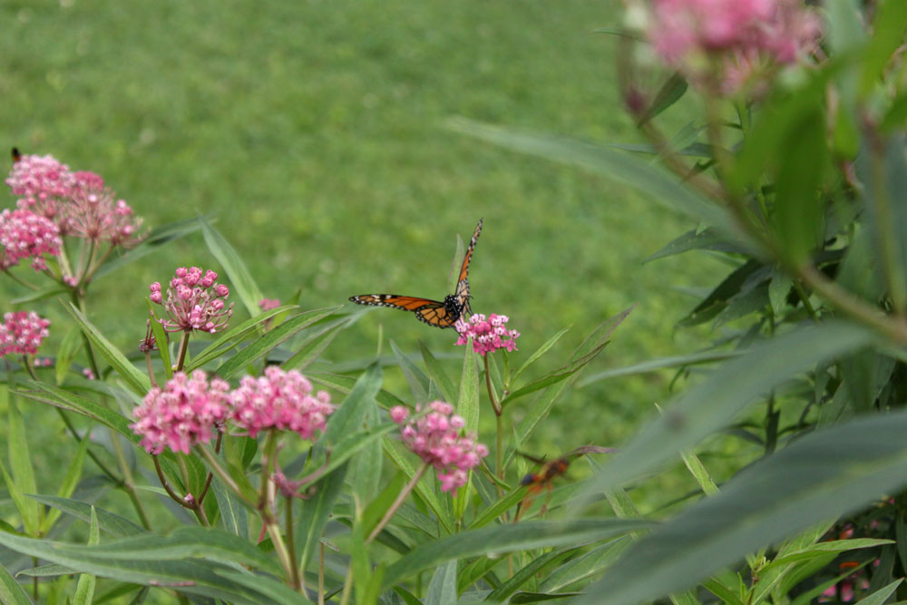 moontree-letterpress-weddings-monarch-butterfly.jpg