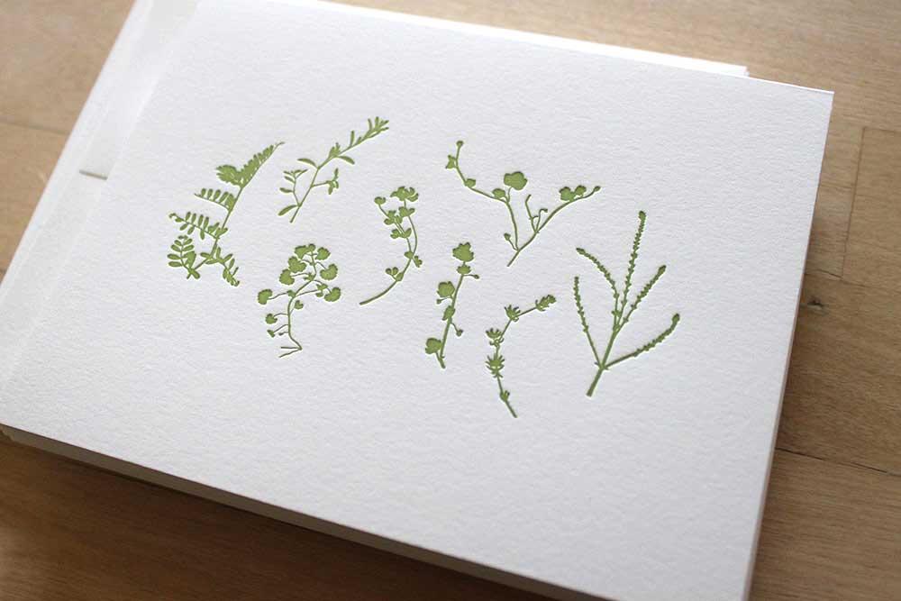 Pressed-Plants.jpg