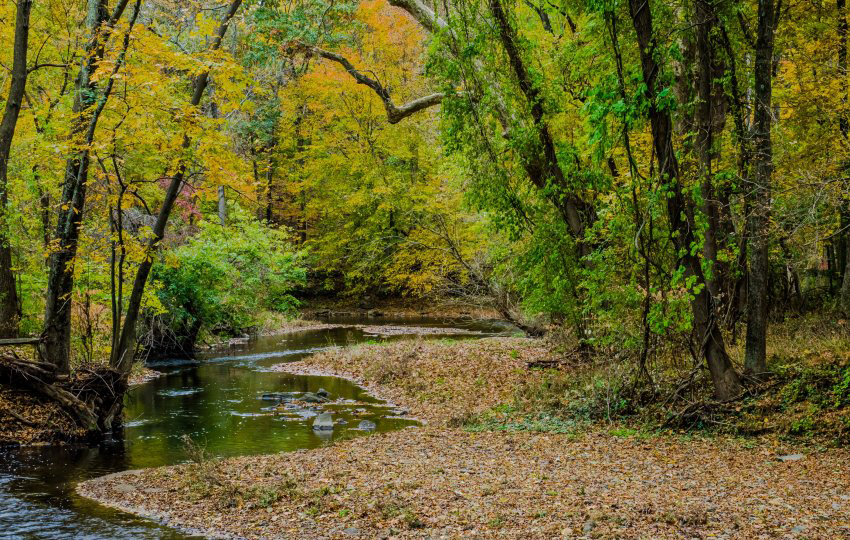 Photo credit: Susan Manners / Natural Lands