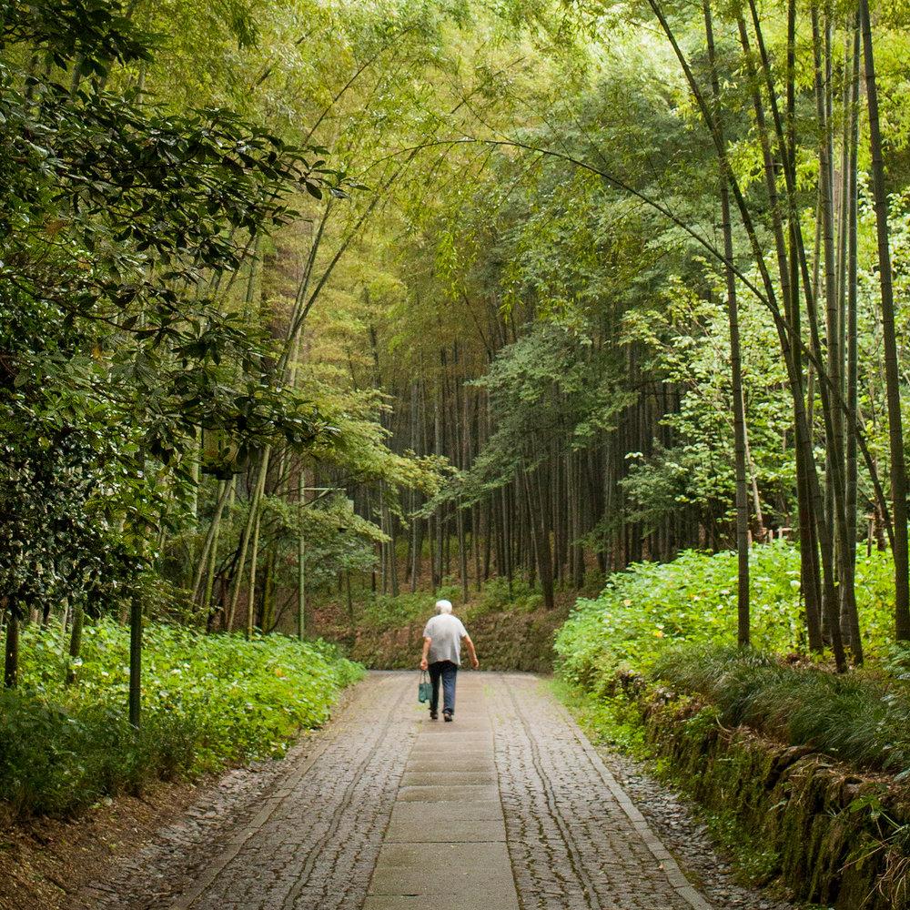 hangzhou-bamboo-garden-2.jpg