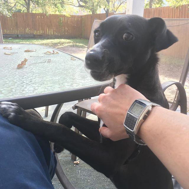Guess what? Billy gotta home yawl! First foster success! #eastsidedogwalkers #firstfoster #puppylove #austintexas #fosterpups #billythedog #texasisthereason