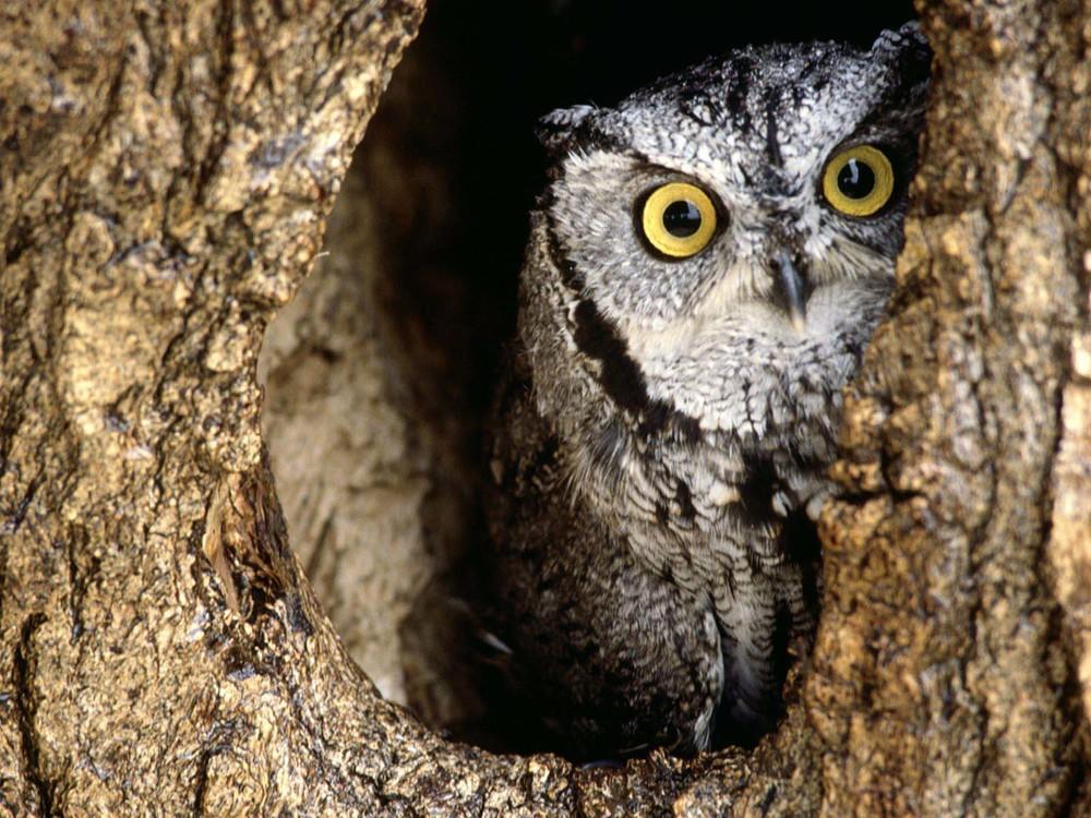 Owl-owls-31450187-1600-1200.jpg