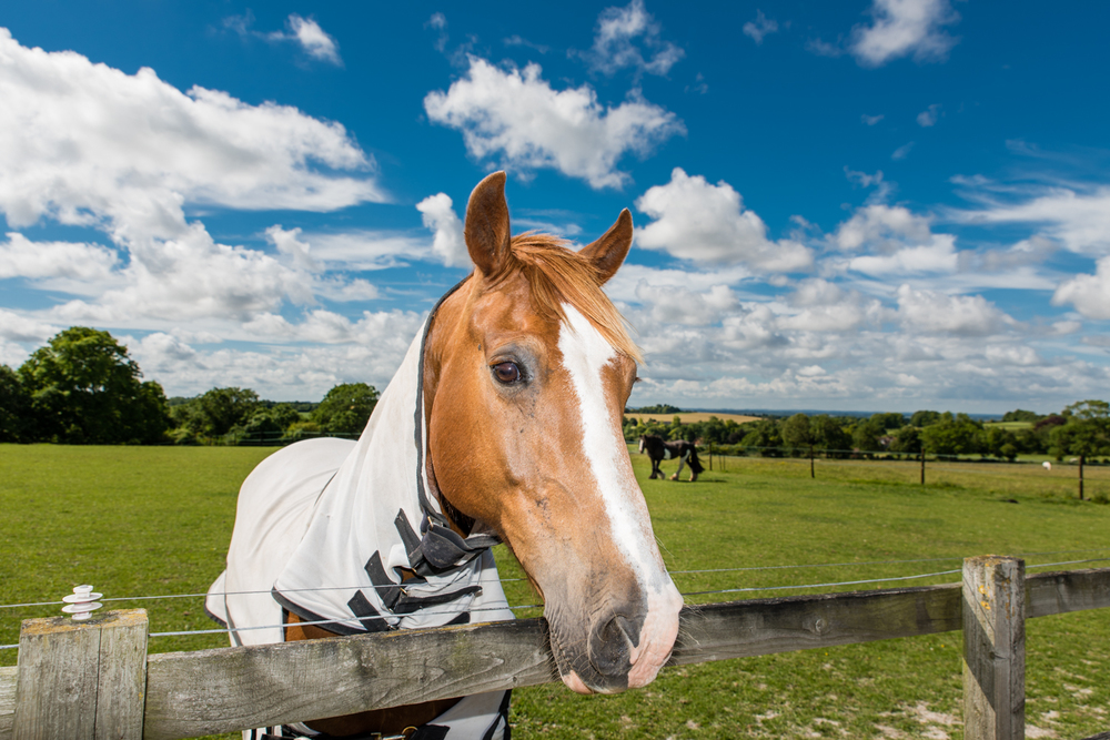 Ginge Stable Horses - 19