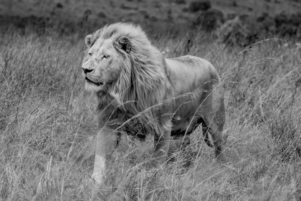 South Africa 2016 Best-8465.jpg