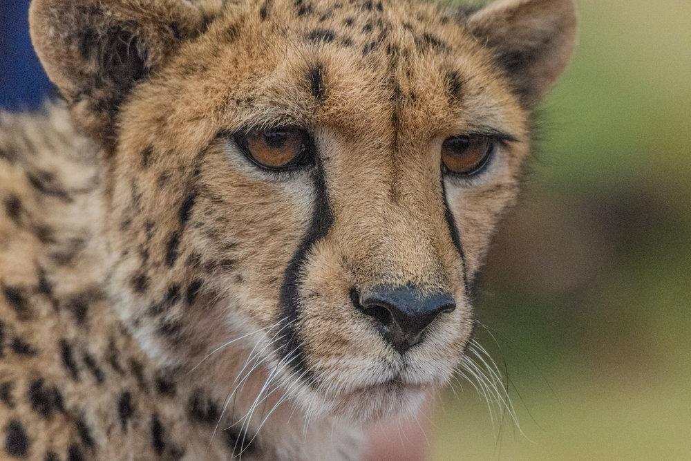South Africa 2016 Best-8838.jpg