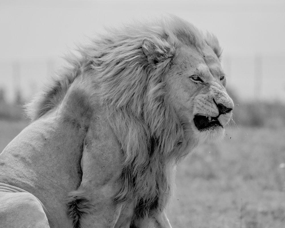 South Africa 2016 Best-2-2.jpg