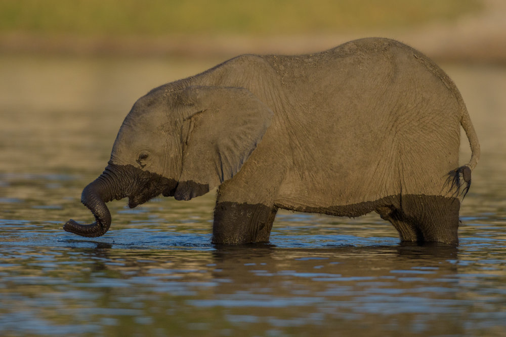 South Africa 2016 Best-4263.jpg