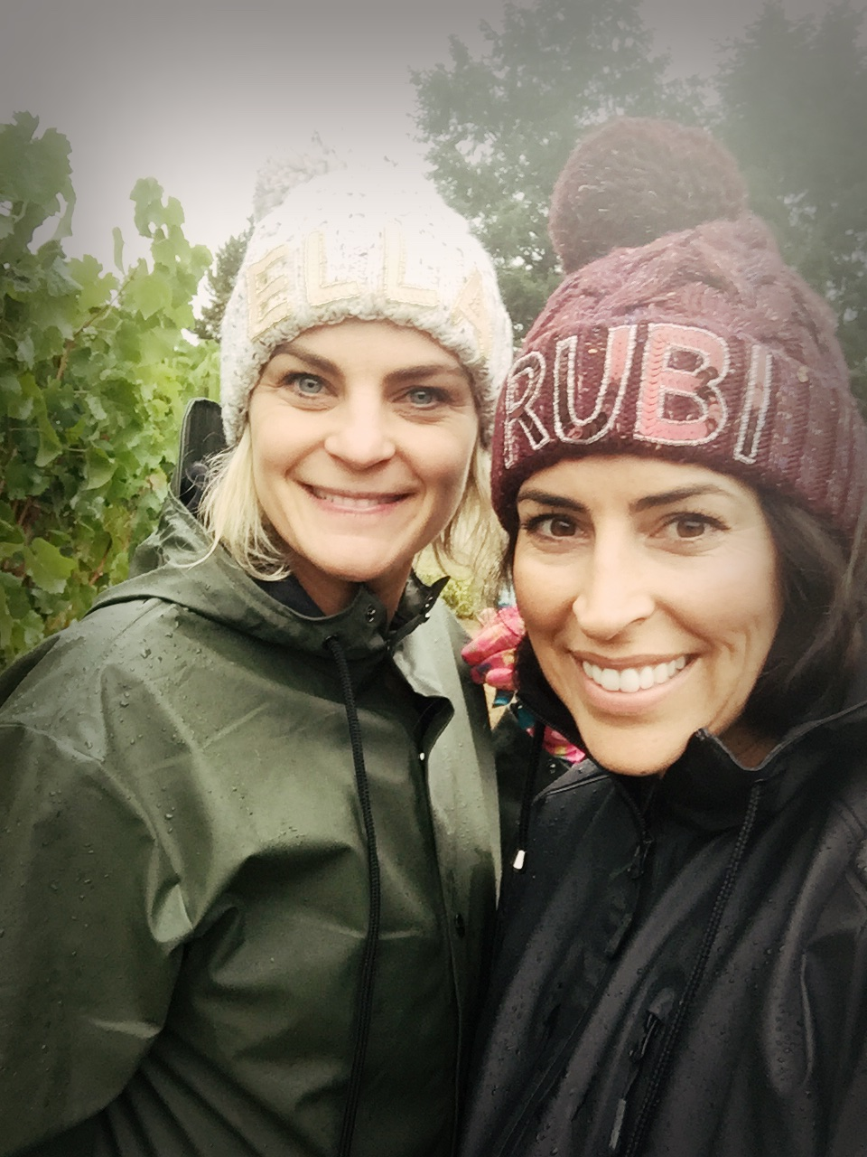 bright and early...in the rain...we pick grapes 🍇