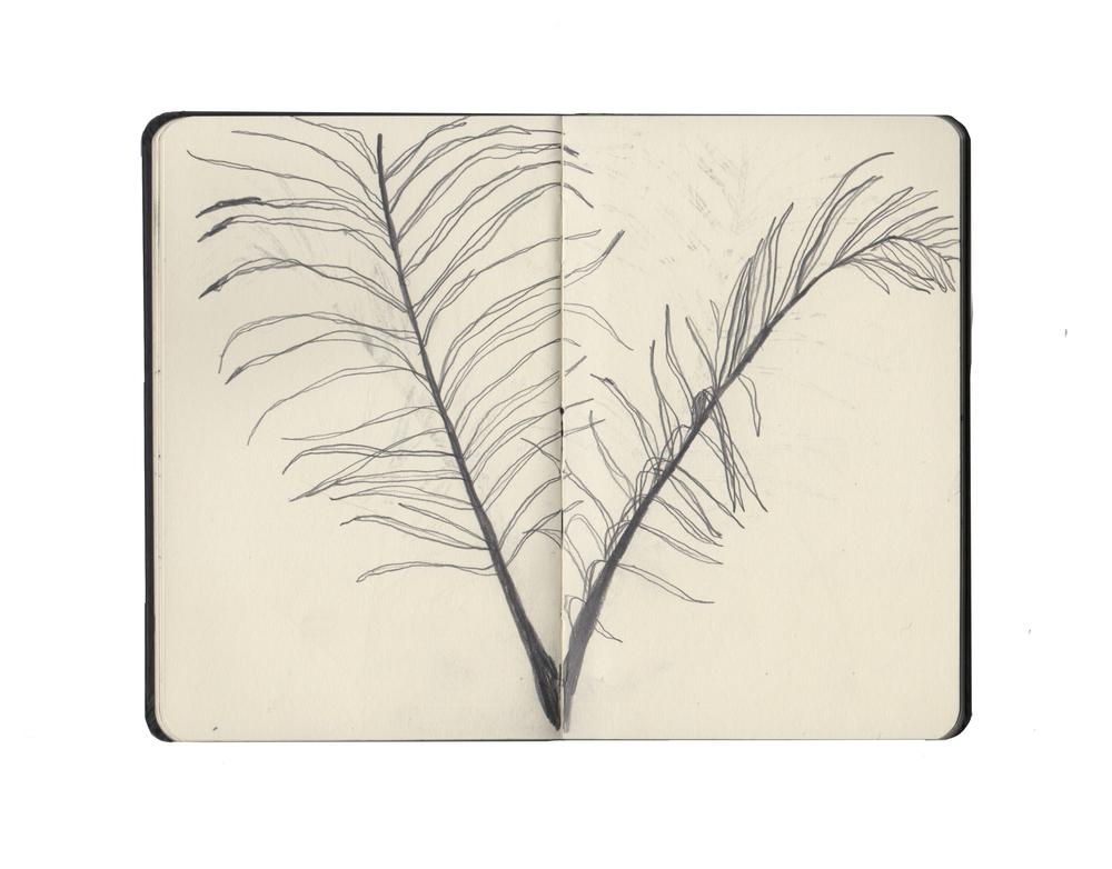 kew sketchbook 2.jpg