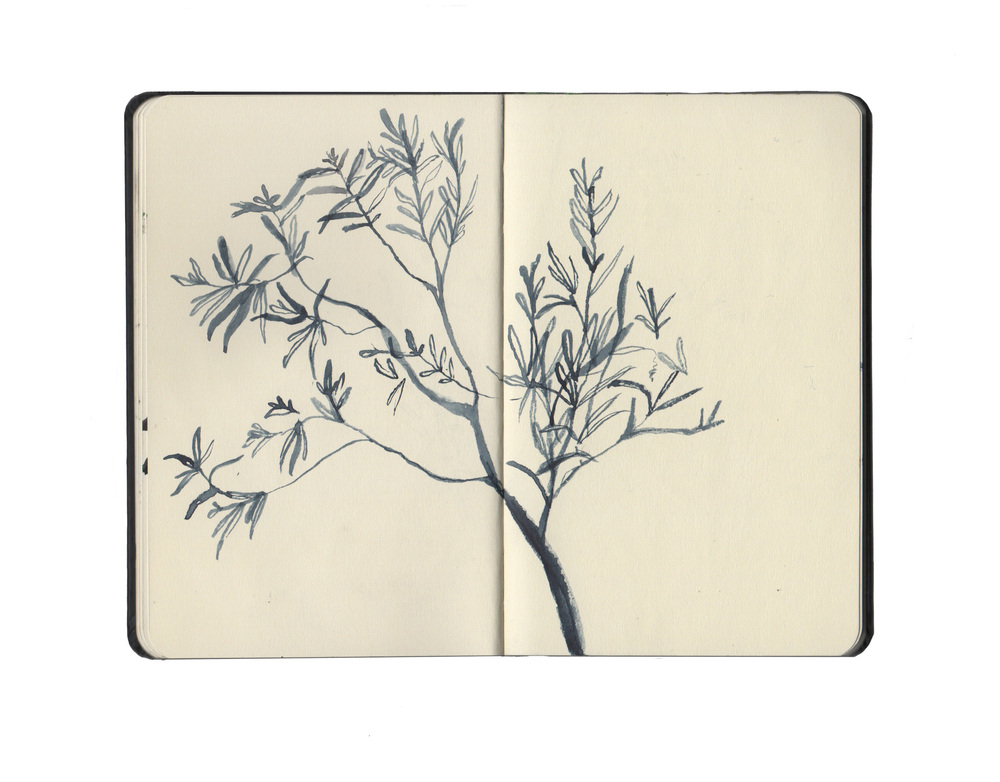 kew sketchbook 5.jpg