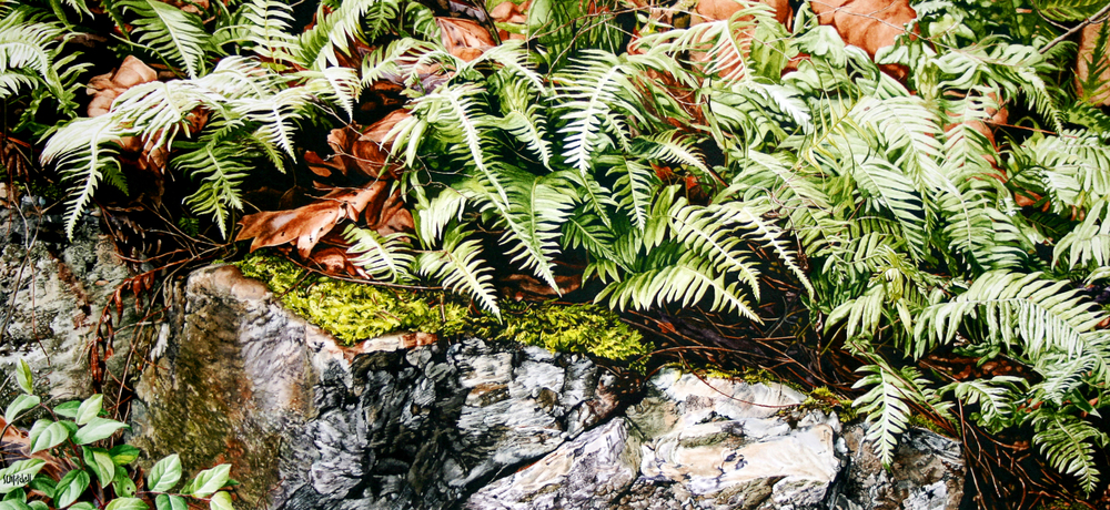 Over the Edge - Ferns and Maple Leaves