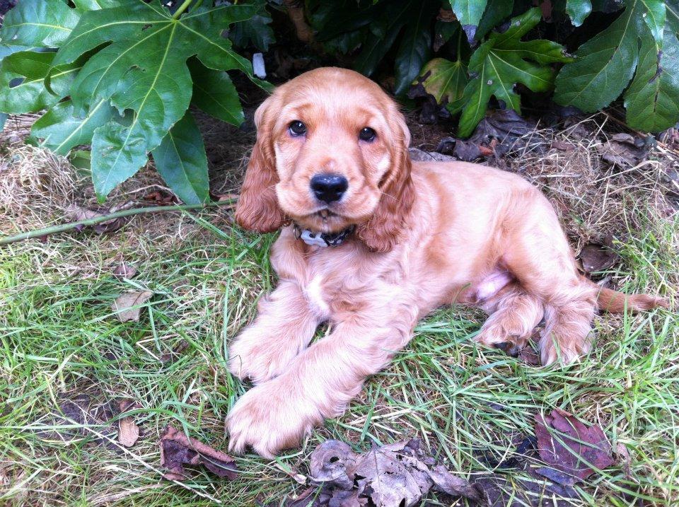 bert puppy.jpg
