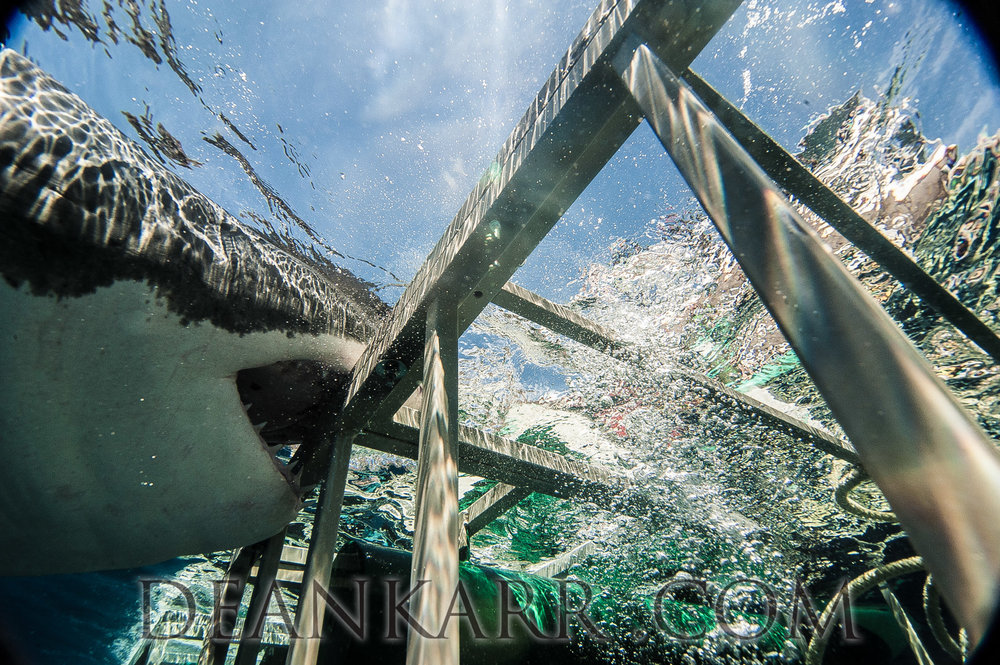 SHARKS 2016-312.jpg