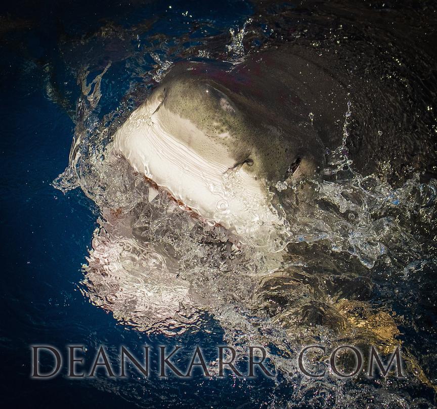 SHARKS 2016-347.jpg