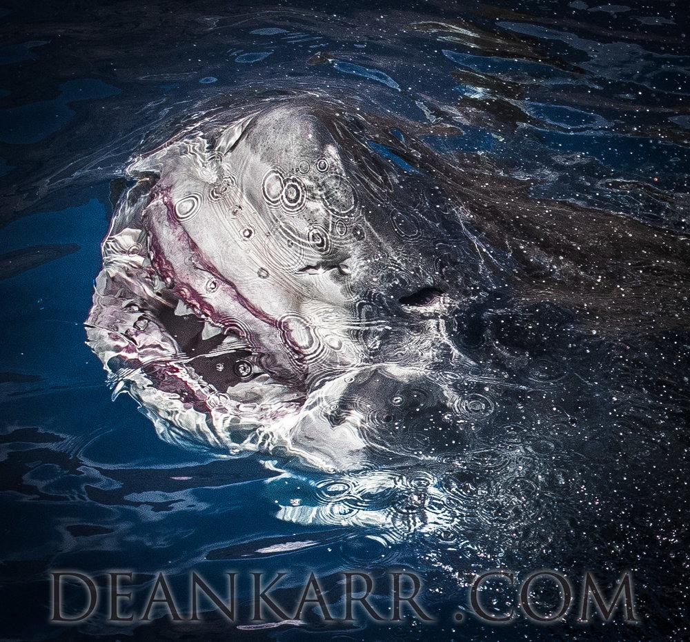 SHARKS 2016-463.jpg